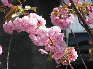 惜春.jpg